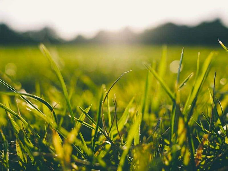 Cellule ciliate come fili di erba